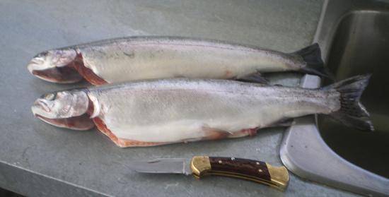 BC Canada Fishing